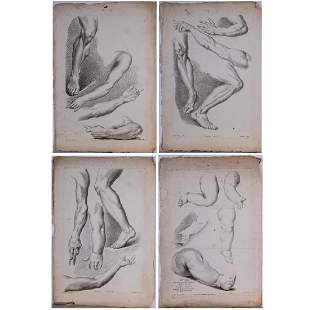 Phillippe Louis Parizeau 17401801 Four Anatomical