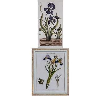 Two Hand Colored Botanical Prints Depicting Irises