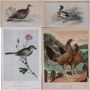 A Group of Four Colored Lithographs and Etchings of