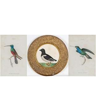 A Group of Three Hand Colored Ornithological Prints