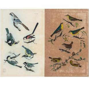 Artist Unknown 19th20th Century Two Ornithological