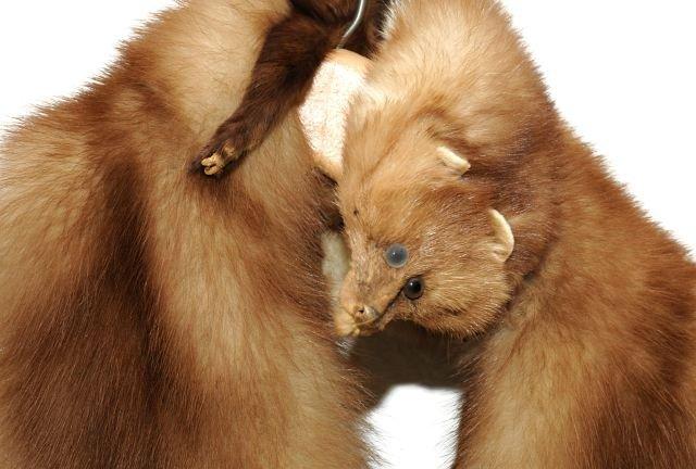 329: A Vintage Baum Marten Fur Stole, - 2