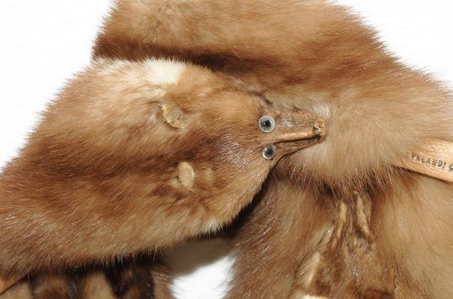 329: A Vintage Baum Marten Fur Stole, - 5