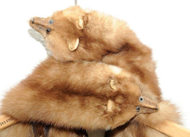 329: A Vintage Baum Marten Fur Stole, - 6