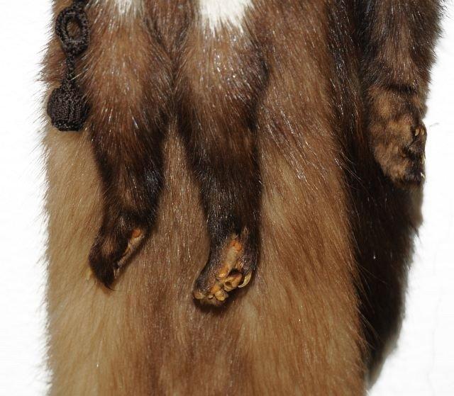329: A Vintage Baum Marten Fur Stole, - 7