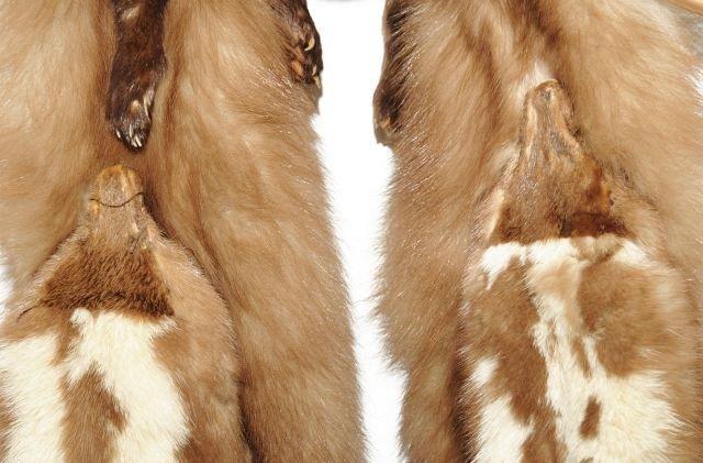 329: A Vintage Baum Marten Fur Stole, - 9