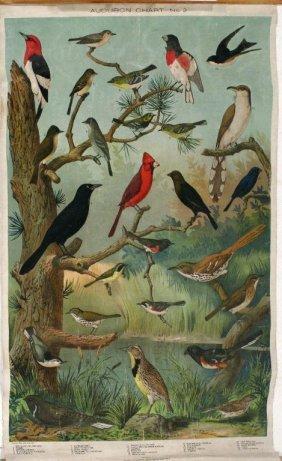 A Set Of 4 Vintage Audubon Charts, By The Massachu