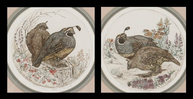 108: Dorothy D. Lundquist (20th Century) Quail in Summe