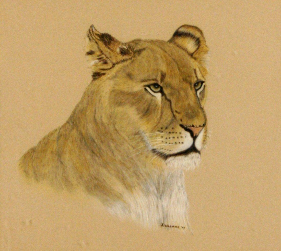 111: J. Williams (20th Century) Portrait of a Lion Head