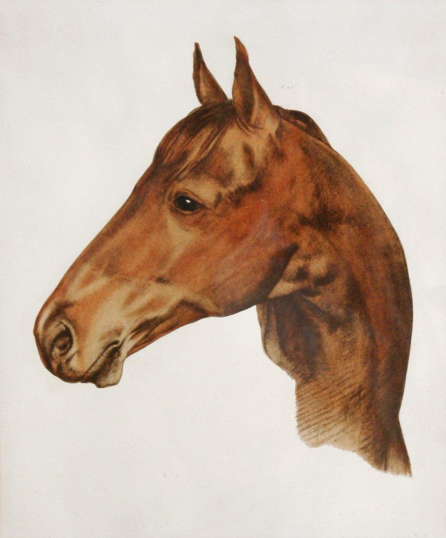 113: Artist Unknown (20th Century) Seabiscuit, Color li