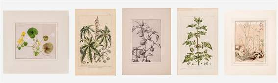 A Group of Botanical Watercolor Studies and Engravings