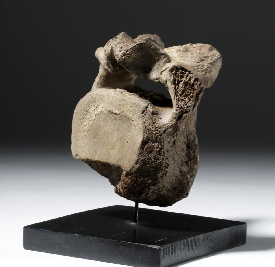 40,000 Year Old Mammoth Vertebrae Found in Alaska