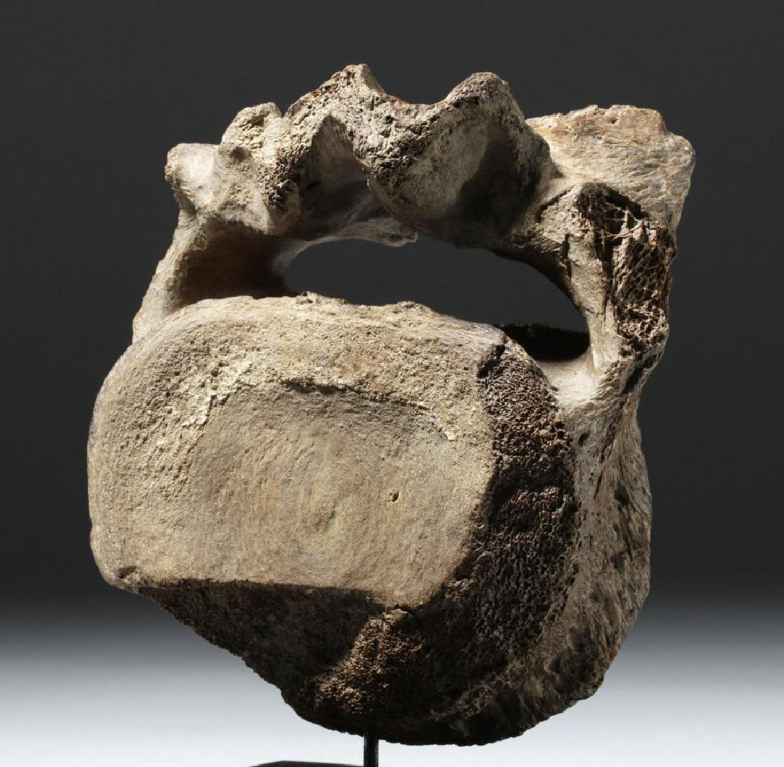 40,000 Year Old Mammoth Vertebrae Found in Alaska - 5