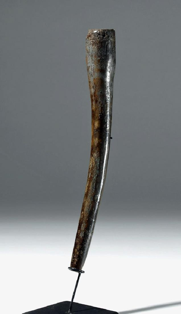 Partially Fossilized Walrus Baculum (Oosik)