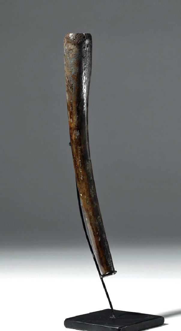 Partially Fossilized Walrus Baculum (Oosik) - 4
