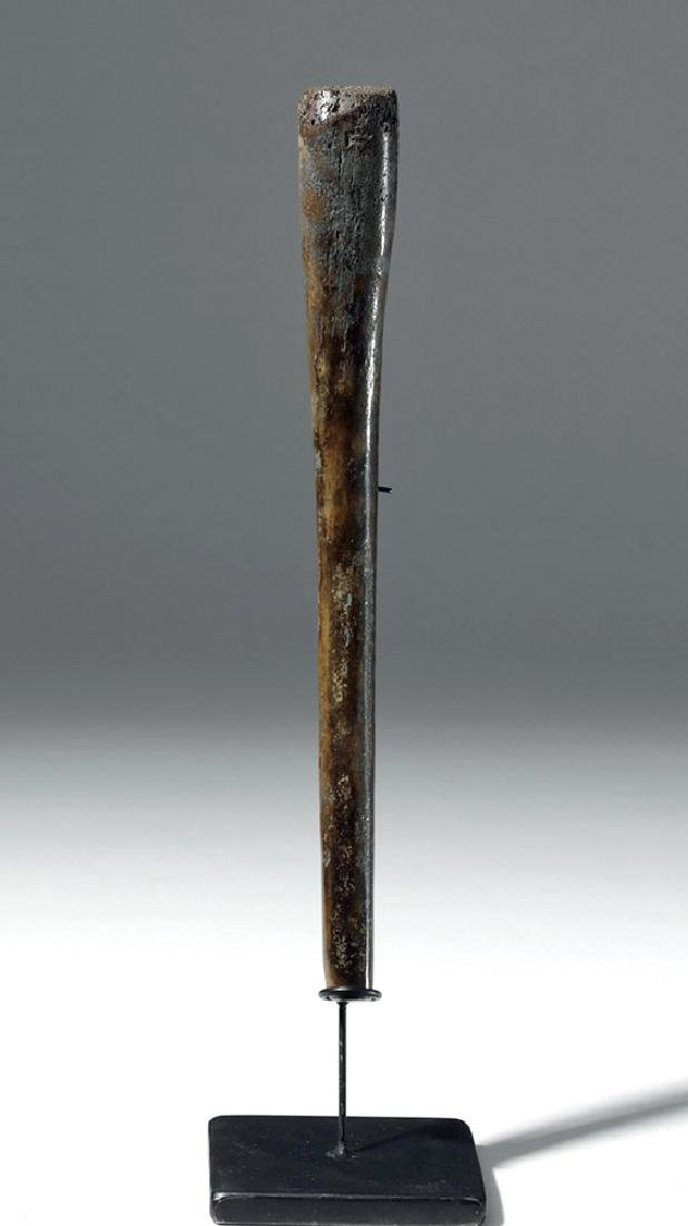 Partially Fossilized Walrus Baculum (Oosik) - 5