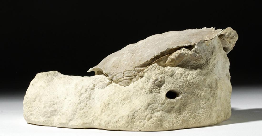 Impressive Harpactocarcinus Crab Fossil - 3