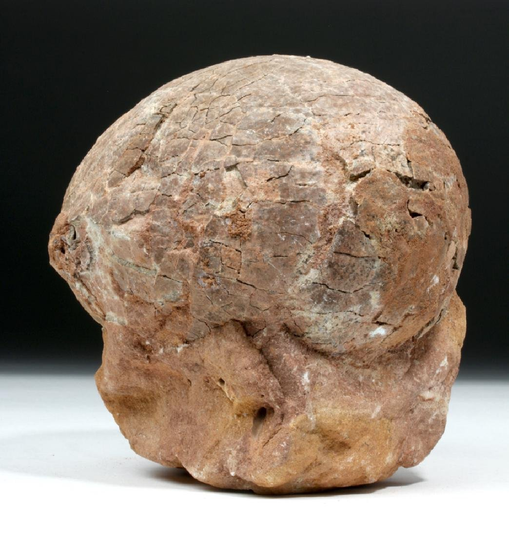 Large Hadrosaur Fossilized Dinosaur Egg - Duckbill - 2