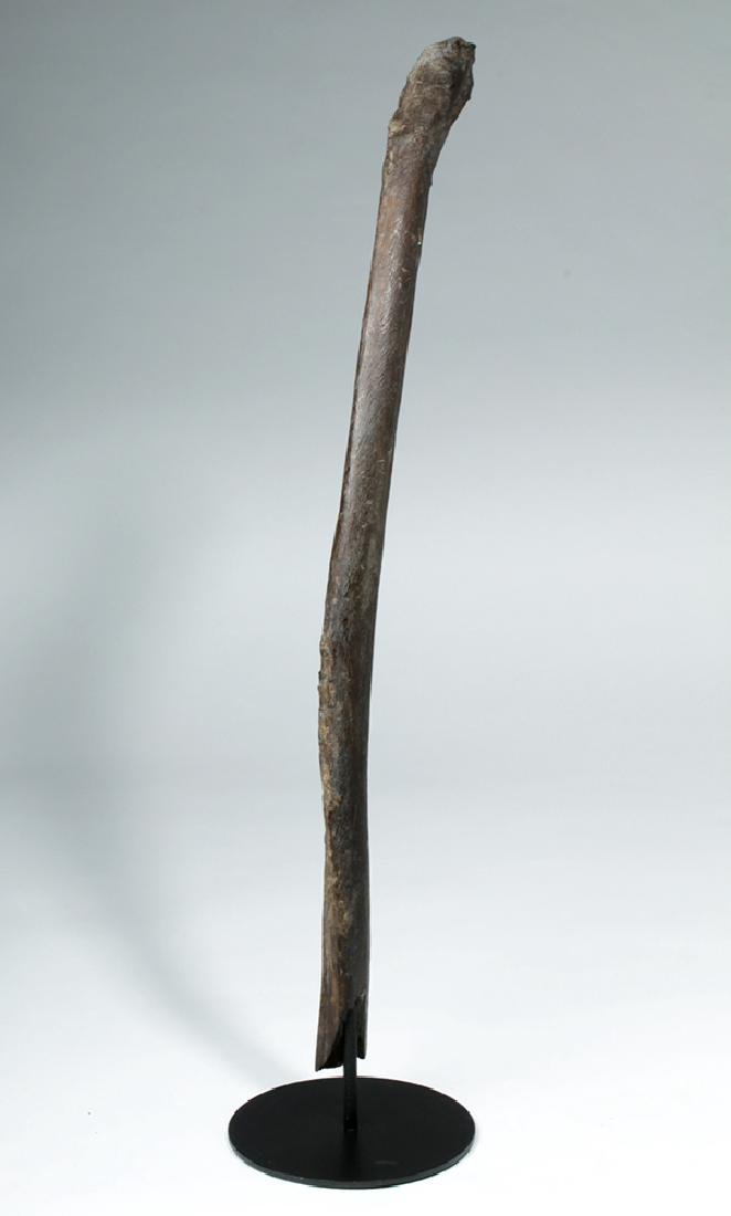 """Late Pleistocene Alaskan Mammoth Rib - 30""""L - 4"""