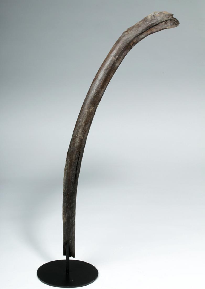 """Late Pleistocene Alaskan Mammoth Rib - 30""""L - 5"""