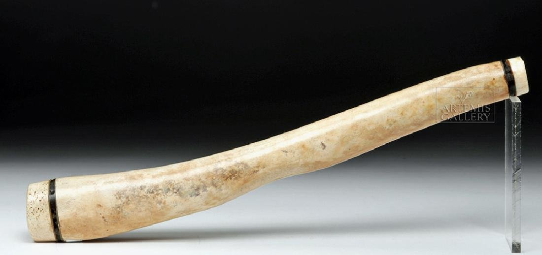 Decorated Fossilized Walrus Oosik