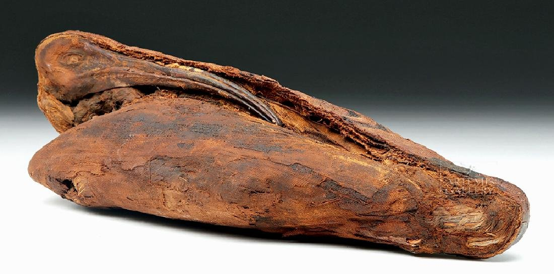 Egyptian Mummified Ibis Bundle - Incredibly Preserved