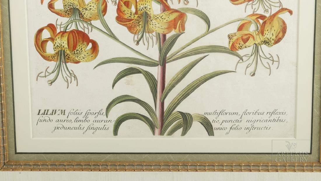 Framed Georg Dionysius Ehret Botanical Engraving, 1751 - 3