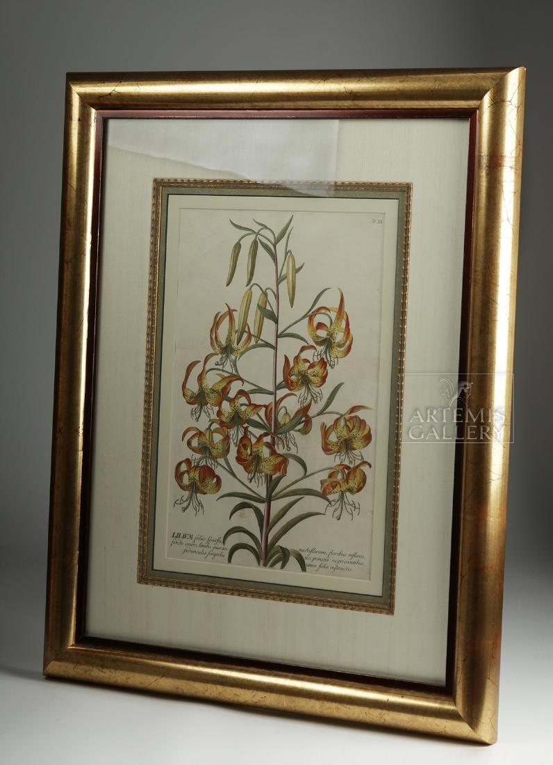 Framed Georg Dionysius Ehret Botanical Engraving, 1751 - 4