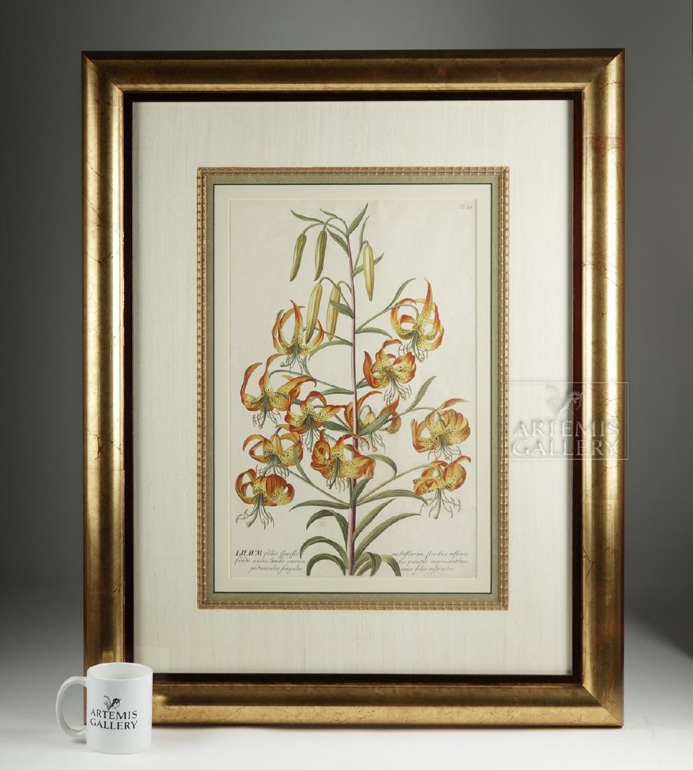 Framed Georg Dionysius Ehret Botanical Engraving, 1751 - 5