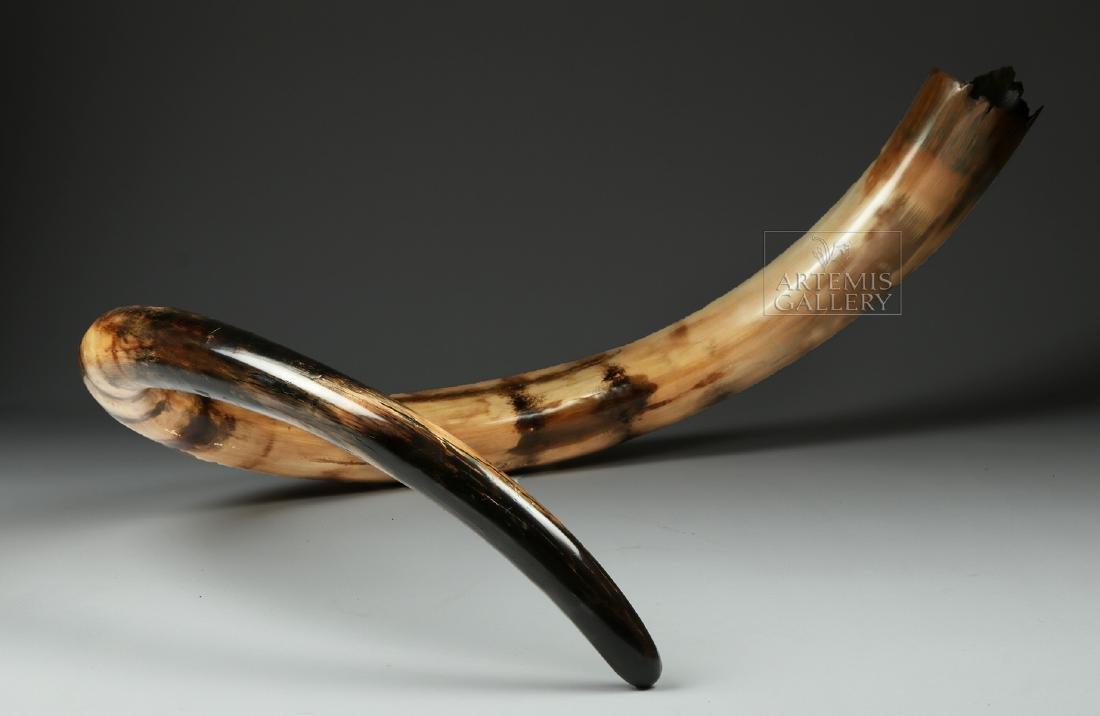 Stunning Large Fossilized Mammoth Tusk - 2