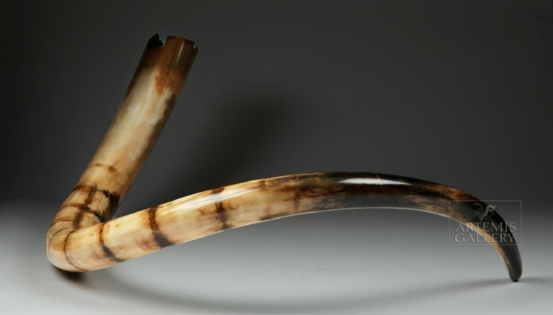 Stunning Large Fossilized Mammoth Tusk - 3