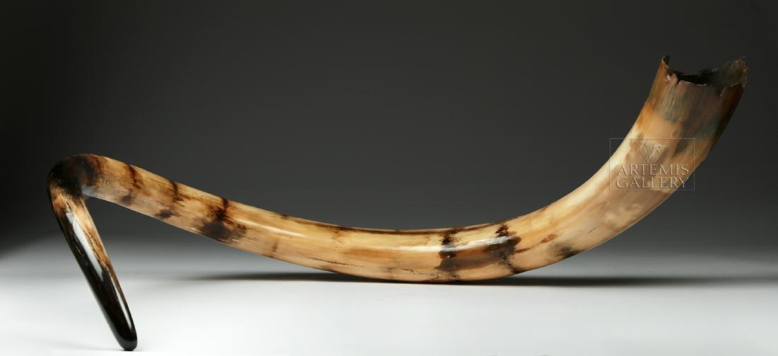 Stunning Large Fossilized Mammoth Tusk - 6