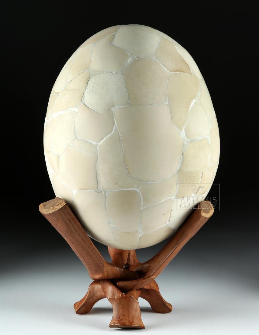16th C. Elephant Bird Egg from Madagascar - 4