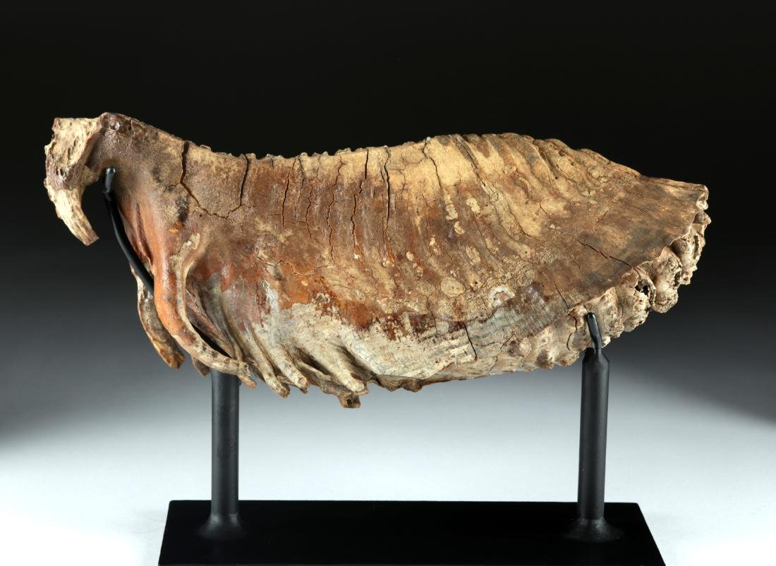 Mammoth Tooth - Beautiful Preservation