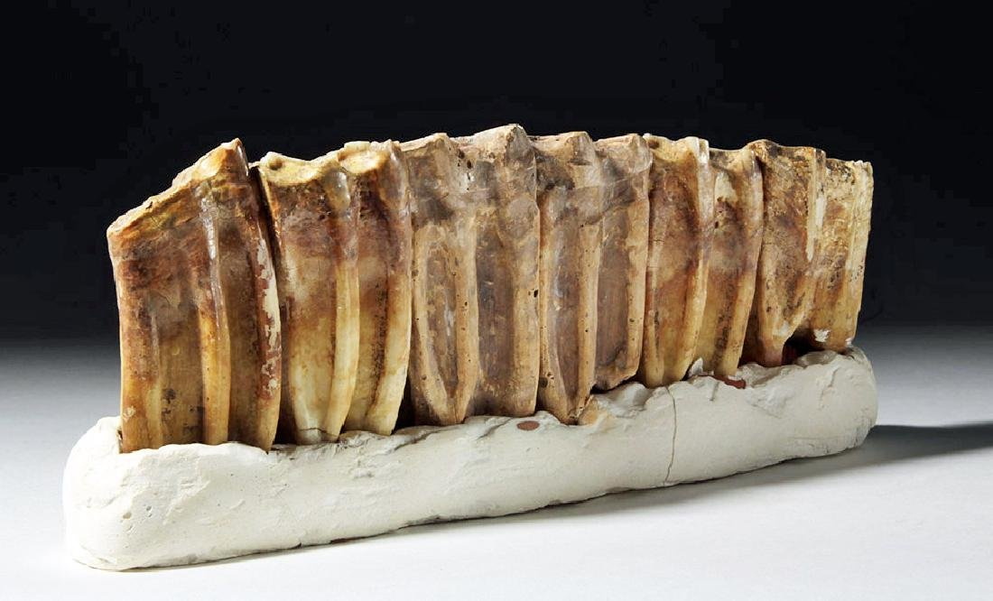 Fossilized Ancient Horse Teeth in Faux Matrix (6) - 2