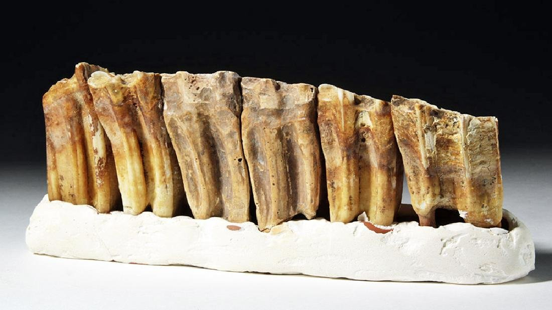 Fossilized Ancient Horse Teeth in Faux Matrix (6) - 3