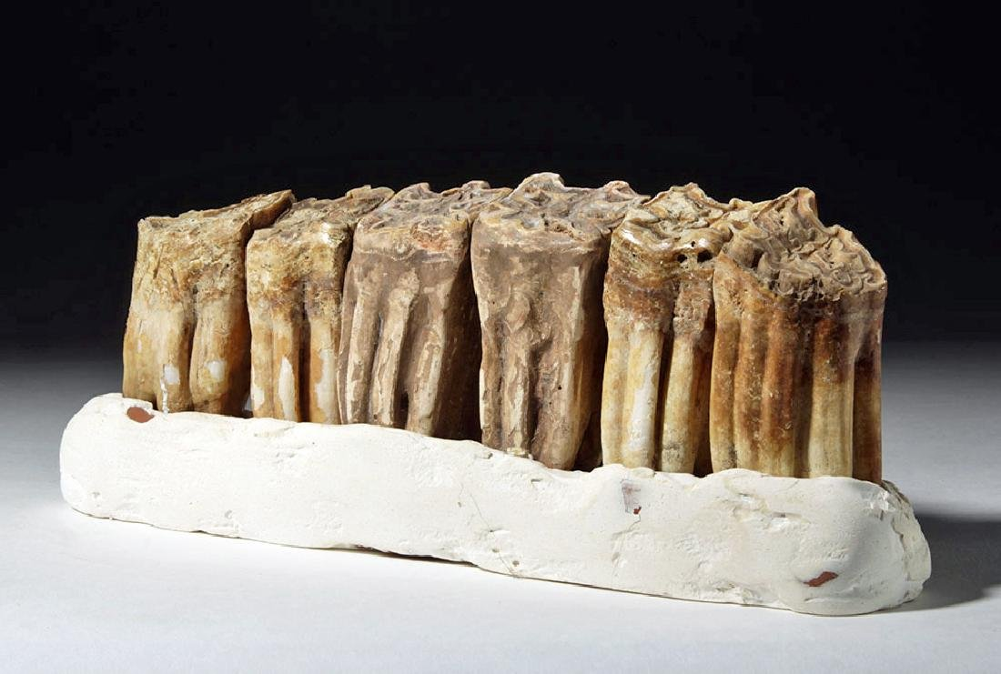 Fossilized Ancient Horse Teeth in Faux Matrix (6) - 4
