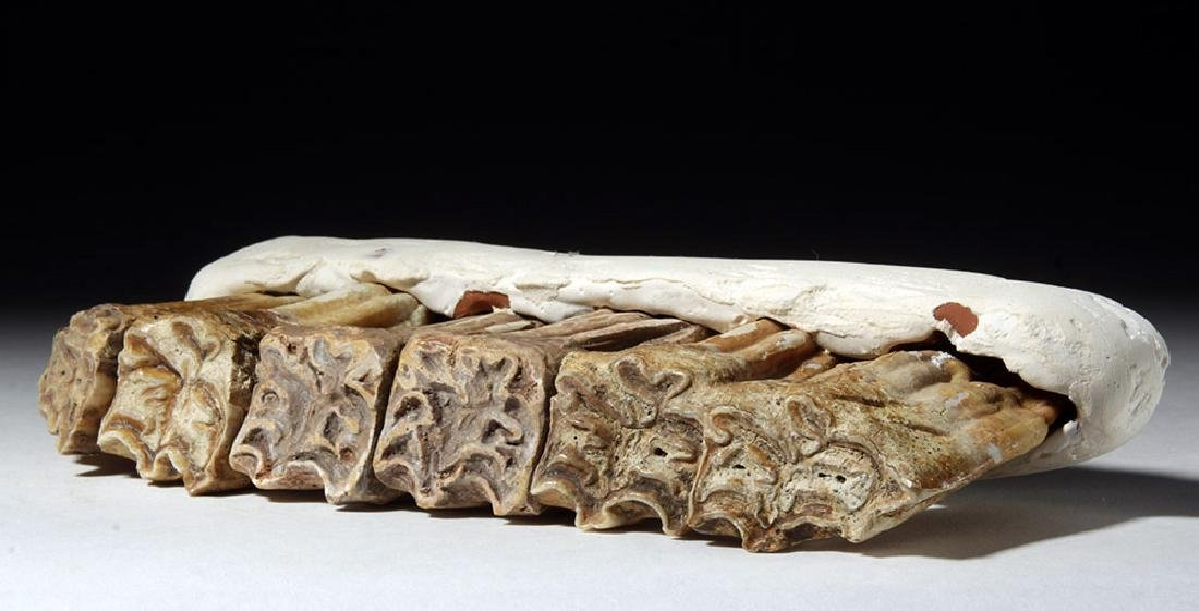 Fossilized Ancient Horse Teeth in Faux Matrix (6) - 5