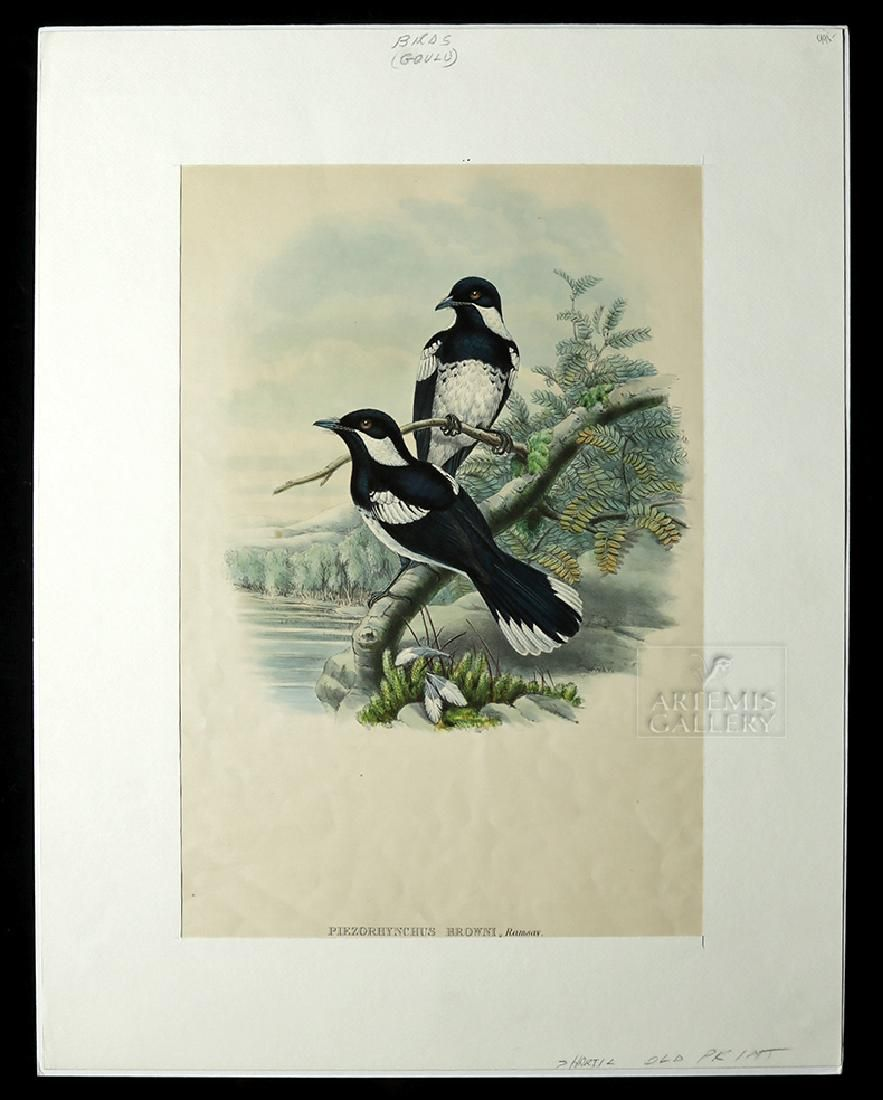 1875 Colored Lithograph, Birds of New Guinea, J. Gould