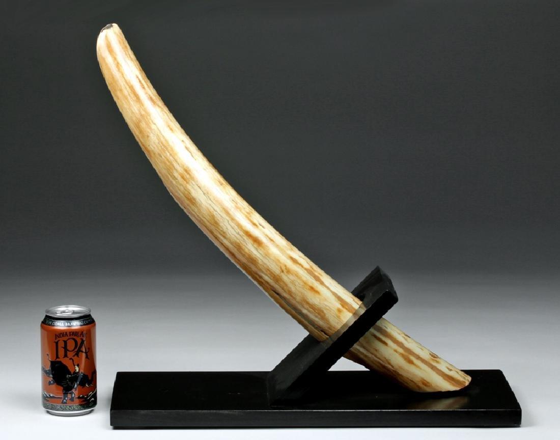 Prehistoric Late Pleistocene Alaskan Mammoth Tusk End