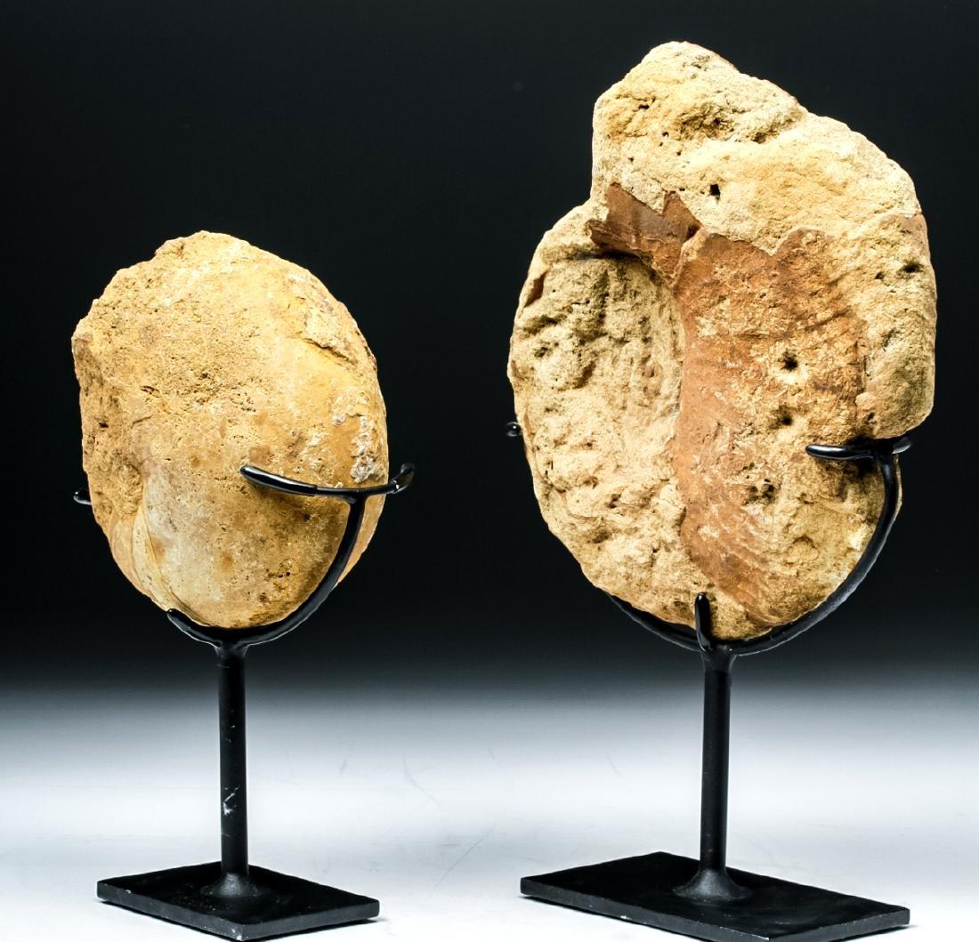 Prehistoric African Ammonite & Nautilus Fossils - 3