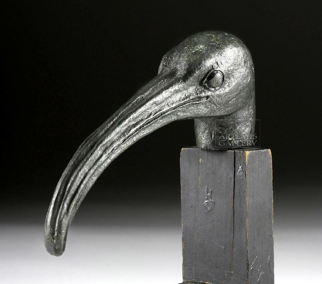 Large Egyptian Bronze Ibis Head - 3