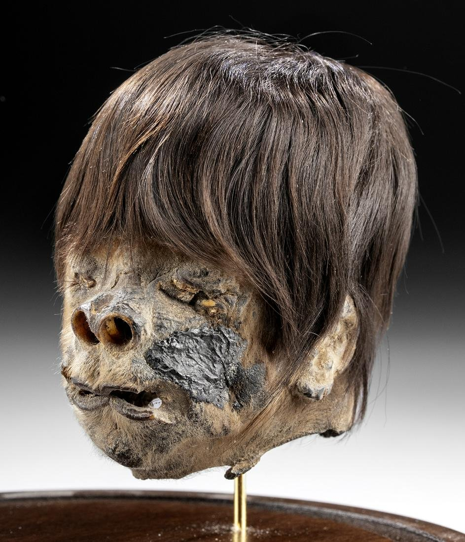 Ca. 1900 South American Jivaro Shrunken Head