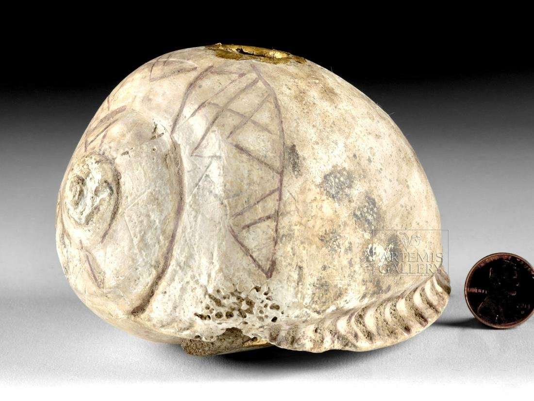 Chavin Carved Shell Poporo w/ Gold Leaf