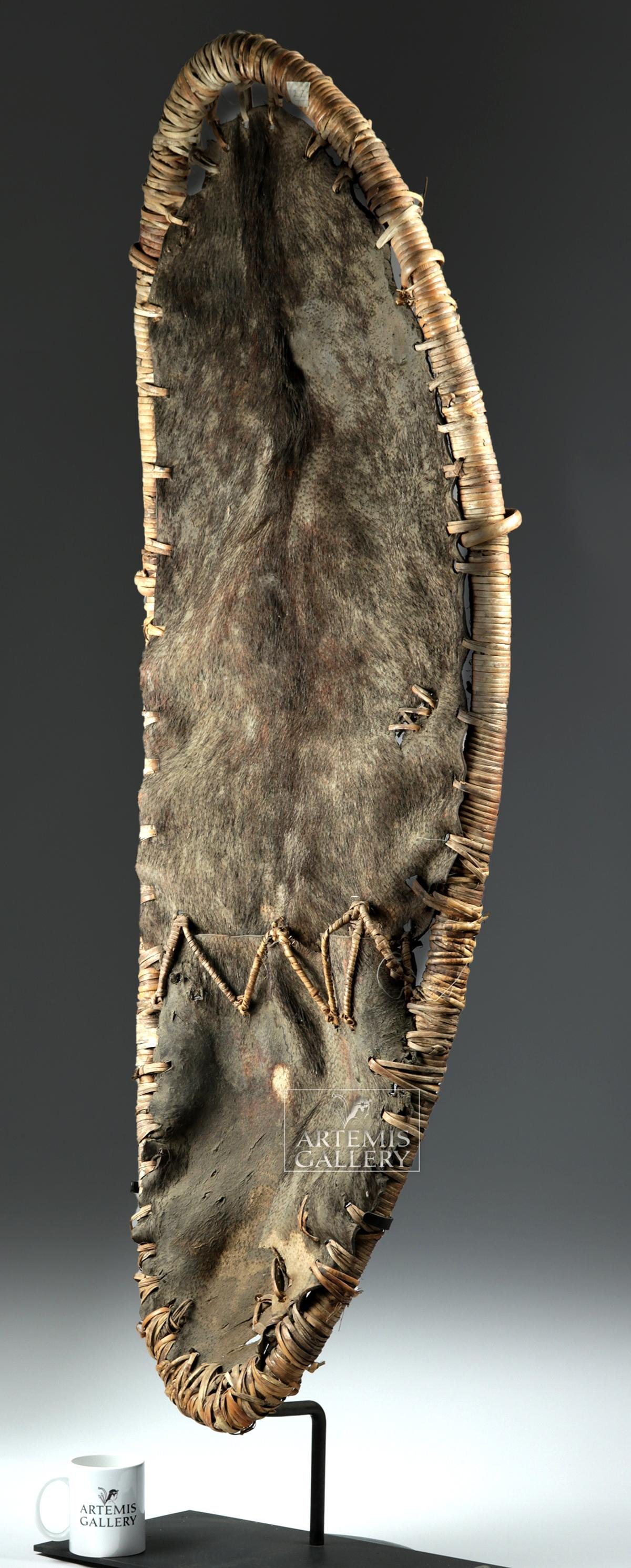Massive 20th C. PNG Sepik River Pig Skin Shield