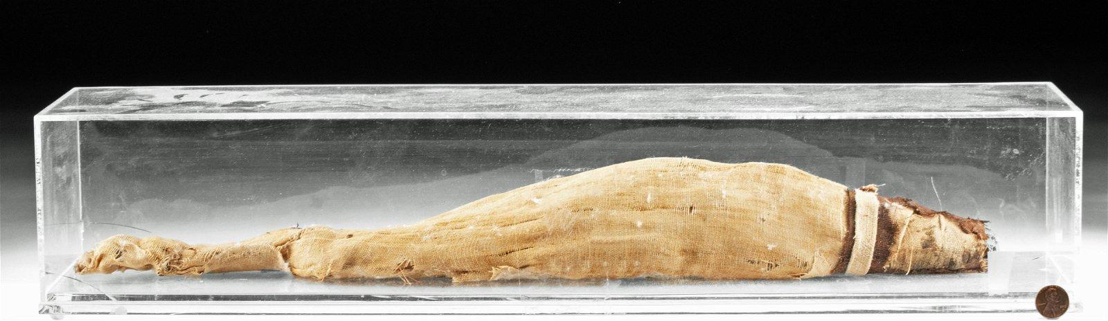 Rare Egyptian Mummy of Fish - Nile Perch w/ X-Ray