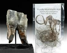 Fossilized Wooly Rhino Tooth & Wooly Mammoth Hair