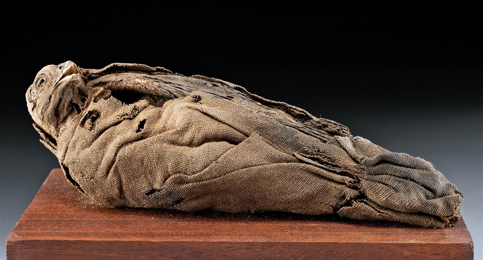 Egyptian Ptolemaic Mummified Falcon