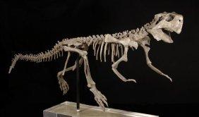 A Dinosaur Skeleton Of Psittacosaurus