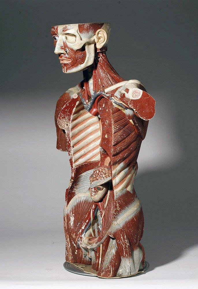 Lifesize 20th C. European Medical School Anatomy Model - 2